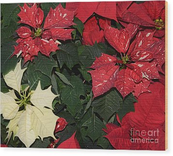 Red And White Poinsettia Wood Print by Kathleen Struckle