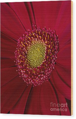 Red And Yellow Wood Print by Mitch Shindelbower
