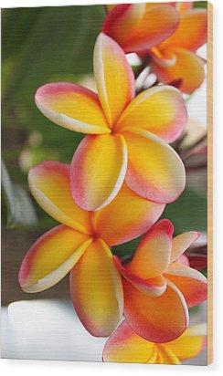 Plumeria Smoothie Wood Print