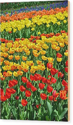 Red And Yellow Tulips Wood Print by Gynt