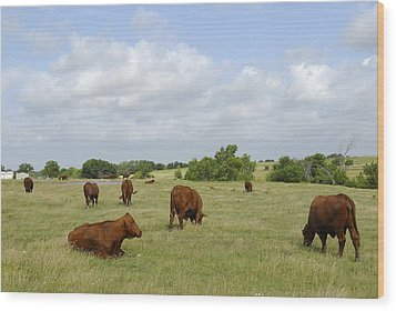 Wood Print featuring the photograph Red Angus Cattle by Charles Beeler