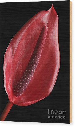 Red Anthurium #3 Wood Print