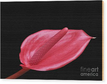 Red Anthurium Wood Print