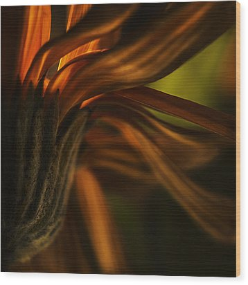 Wood Print featuring the photograph Red Autumn Blossom Detail by Peter v Quenter