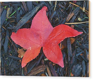 Red Autumn Leaf Wood Print