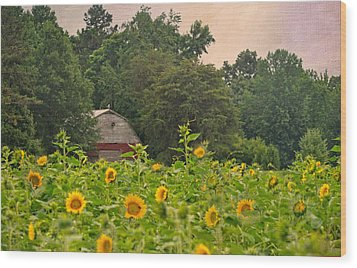 Red Barn Among The Sunflowers Wood Print