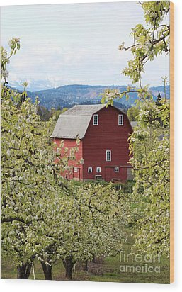Wood Print featuring the photograph Red Barn And Apple Blossoms by Patricia Babbitt