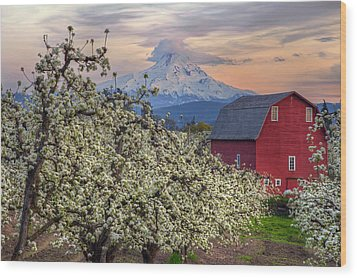Red Barn In Hood River Pear Orchard Wood Print