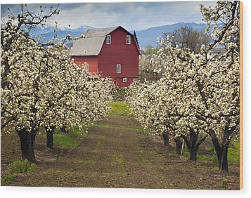 Red Barn Spring Wood Print by Mike  Dawson