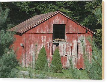 Red Barn Two Trees Wood Print by Paulette Maffucci