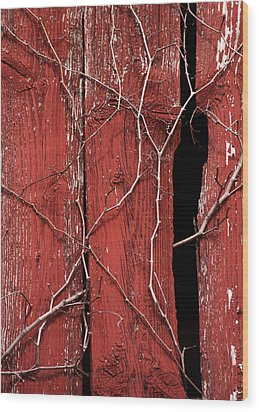 Red Barn Wood With Dried Vines Wood Print by Rebecca Sherman
