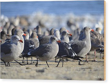 Red Beak Seagull Convention Wood Print