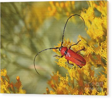 Red Beetle Wood Print by Marty Fancy
