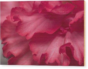 Red Begonia Petals Wood Print by Priya Ghose