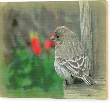 Red Behind Little Beak Wood Print by Heidi Manly