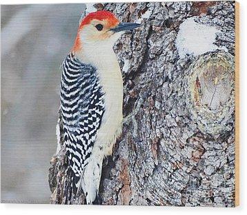 Red Bellied Woodpecker Wood Print by Gena Weiser