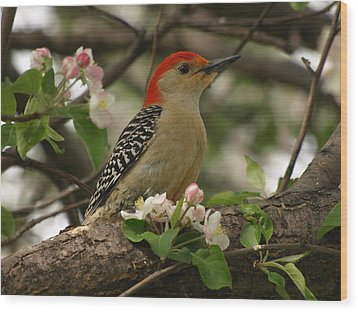 Wood Print featuring the photograph Red-bellied Woodpecker by James Peterson