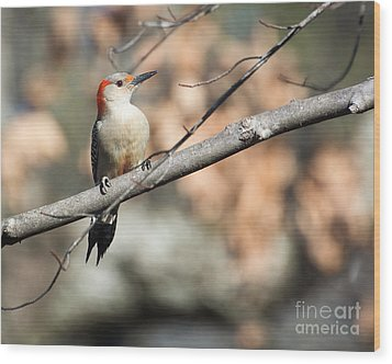 Red Belly Wood Print by Caisues Photography