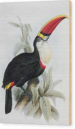 Red-billed Toucan Wood Print by Edward Lear