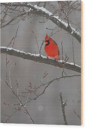 Red Bird Wood Print by Coby Cooper