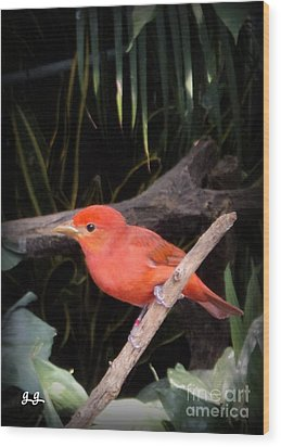 Red Bird Pose Wood Print