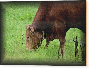 Red Brangus Bull Wood Print by Maria Urso