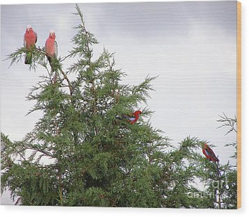 Red-breasted Cockatoos And Crimson Rosellas Wood Print by Bev Conover