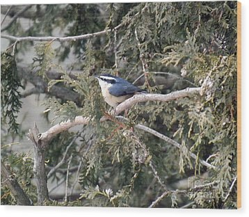 Wood Print featuring the photograph Red Breasted Nuthatch by Brenda Brown