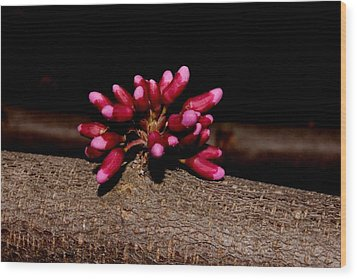 Red Bud Buds Wood Print