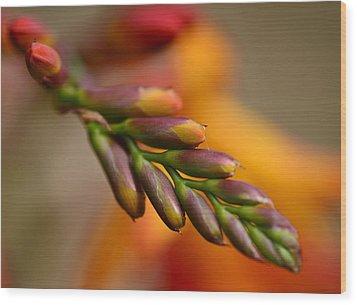Red Buds Macro Wood Print