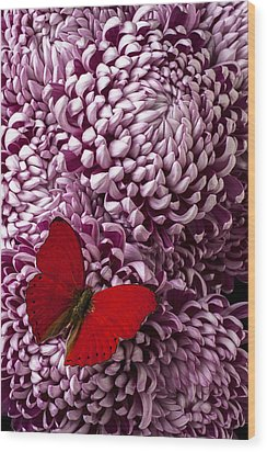 Red Butterfly On Red Mum Wood Print by Garry Gay