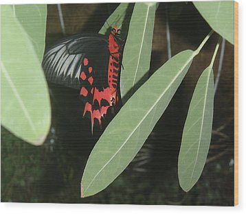 Wood Print featuring the photograph Red Butterfly by Robert Nickologianis
