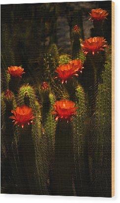 Red Cactus Flowers II  Wood Print by Saija  Lehtonen
