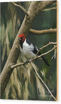 Red-capped Cardinal Wood Print