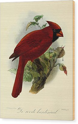 Red Cardinal Wood Print by Rob Dreyer