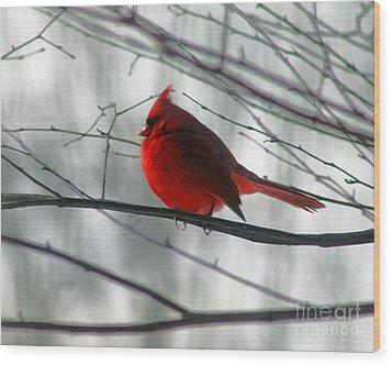 Red Cardinal On Winter Branch  Wood Print by Karen Adams
