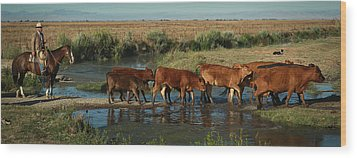 Red Cattle Wood Print by Diane Bohna