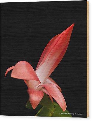 Red Christmas Cactus Wood Print
