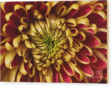 Red Chrysanthemum Wood Print