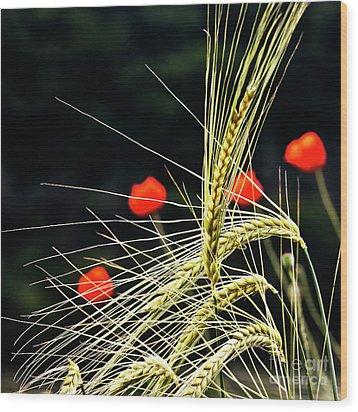 Red Corn Poppies Wood Print by Heiko Koehrer-Wagner