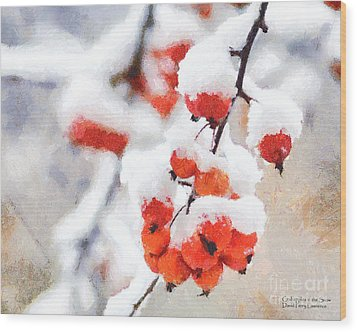 Red Crabapples In The Winter Snow - A Digital Painting By D Perry Lawrence Wood Print by David Perry Lawrence