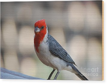 Red Crested Cardinal Wood Print by DejaVu Designs