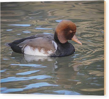 Wood Print featuring the photograph Red Crested Pochard by Tyson and Kathy Smith