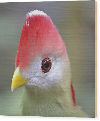 Red Crested Turaco Wood Print