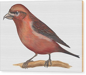 Red Crossbill Wood Print by Anonymous