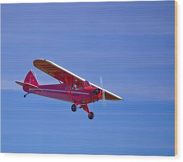 Red Cub Wood Print