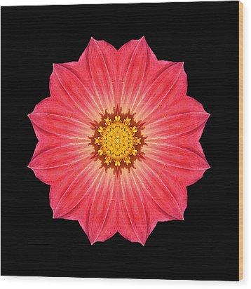 Red Dahlia Hybrid I Flower Mandala Wood Print by David J Bookbinder