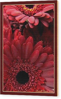 Red Daisies Wood Print by Danielle  Parent