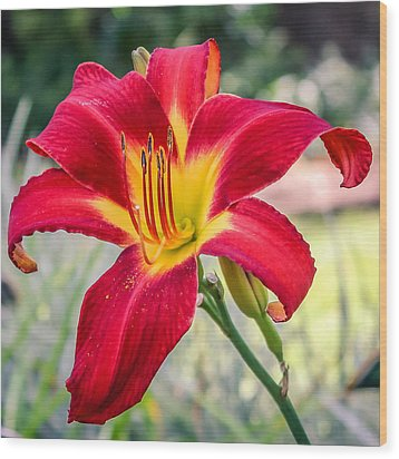 Wood Print featuring the photograph Red Daylily by Rob Sellers