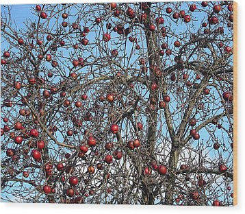 Red Delights At Season End Wood Print